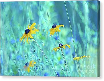 Happiness Is In The Meadows - A111 Canvas Print by Variance Collections