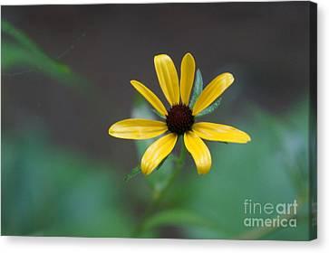 Happy Bloom Canvas Print
