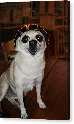 Happy Chihuahua  Canvas Print by Angie Wingerd