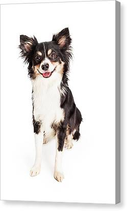 Happy Chihuahua Mixed Breed Dog Sitting Canvas Print