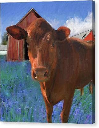 Happy Cow West Marin  Canvas Print