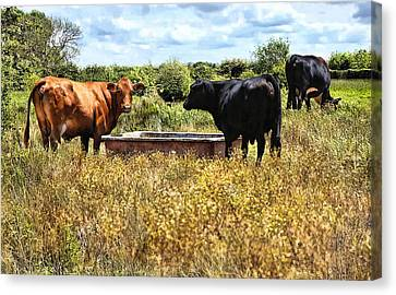 Happy Cows Come From California ... Canvas Print by Bob Kramer