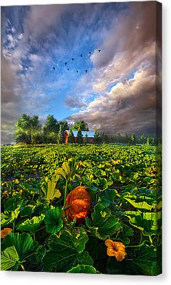 Happy Endings Canvas Print by Phil Koch