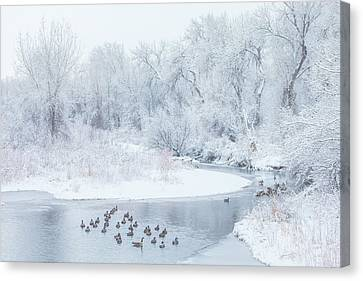 Canvas Print featuring the photograph Happy Geese by Darren White