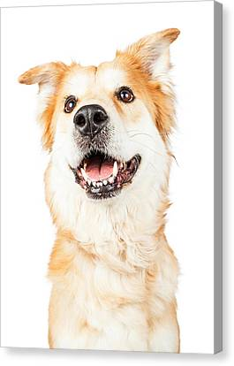 Happy Golden Retriever Crossbreed Dog Looking Up Canvas Print by Susan Schmitz