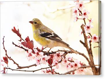 Happy Goldfinch Canvas Print by Trina Ansel