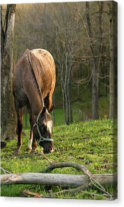 Canvas Print featuring the photograph Happy Grazing by Angela Rath
