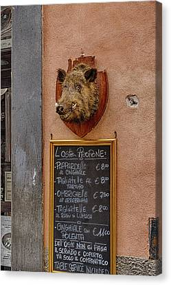 Happy Hog  Canvas Print by William Ferry