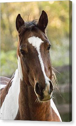Happy Horse Canvas Print