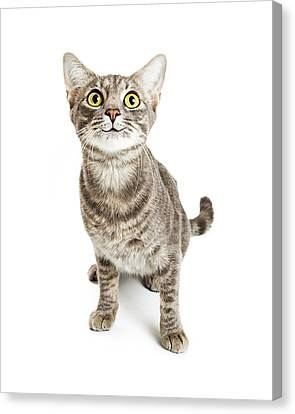 Happy Smiling Young Cat Expressive Eyes Canvas Print