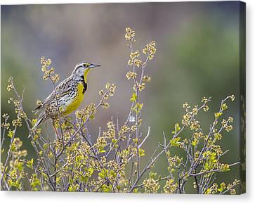 Happy Spring Canvas Print by Verdon