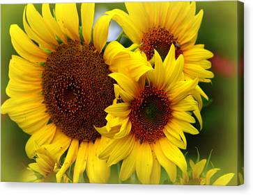 Canvas Print featuring the photograph Happy Sunflowers by Kay Novy