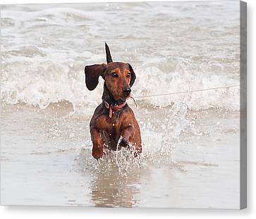 Happy Surf Dog Canvas Print