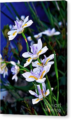 Happy Wild Iris Canvas Print by Kaye Menner