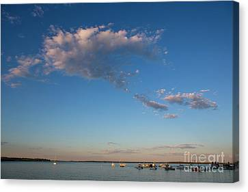 Harbor In Lincolnville,maine Canvas Print by Diane Diederich
