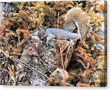 Canvas Print featuring the photograph Hard Day Collecting Nuts by Debbie Stahre