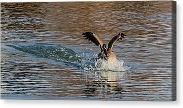 Canvas Print featuring the photograph Hard Landing by Yeates Photography