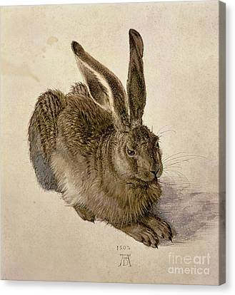 Hare Canvas Print by Albrecht Durer