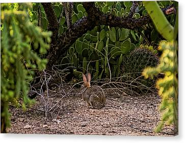 Canvas Print featuring the photograph Hare Habitat H22 by Mark Myhaver