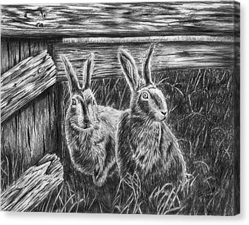 Hare Line  Canvas Print by Peter Piatt