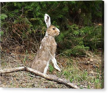 Canvas Print featuring the photograph Hare That by DeeLon Merritt