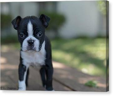 Canvas Print featuring the photograph Harley As A Puppy by Lora Lee Chapman