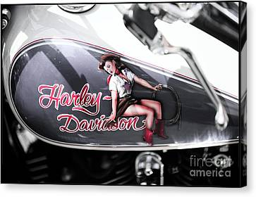 Harley Davidson Pin Up Canvas Print by Stefano Senise