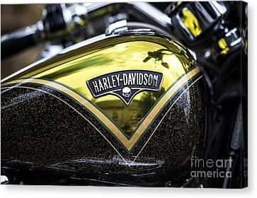 Harley Gold Canvas Print