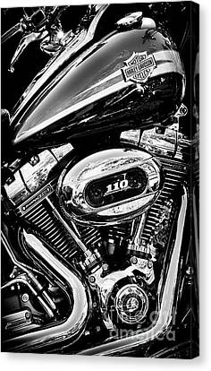Canvas Print featuring the photograph Harley  by Tim Gainey