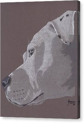 Harlo Canvas Print by Stacey Jasmin