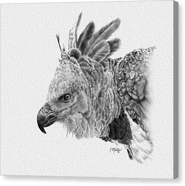 Raptor Canvas Print - Harpy Eagle by Kathie Miller