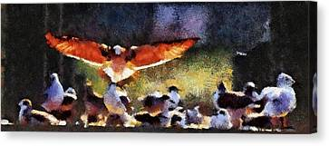 Harris Creek Gulls Canvas Print
