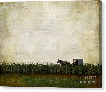 Amish Farms Canvas Print - Harvest by AJ Yoder