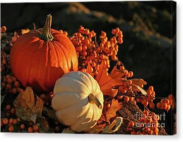 Harvest Colors Canvas Print by Sandra Cunningham