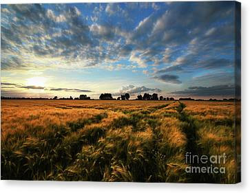 Canvas Print featuring the photograph Harvest by Franziskus Pfleghart