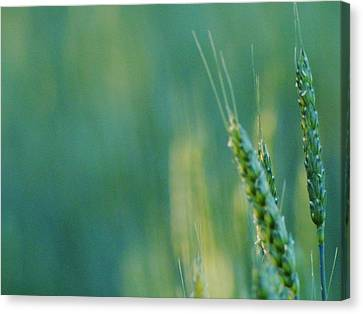 Canvas Print featuring the photograph Harvest Hues by Blair Wainman