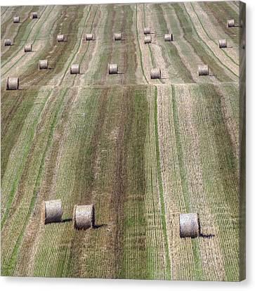 Bale Canvas Print - Harvest  by Joana Kruse