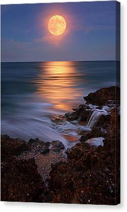 Harvest Moon Rising Over Beach Rocks On Hutchinson Island Florida During Twilight. Canvas Print by Justin Kelefas