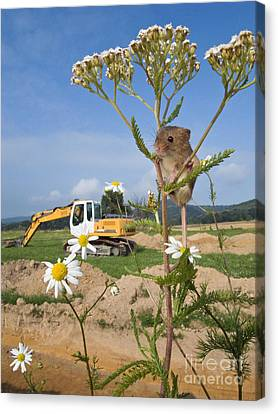 Harvest Mouse And Backhoe Canvas Print by Jean-Louis Klein & Marie-Luce Hubert