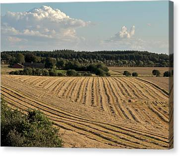 Field Of Crops Canvas Print - Harvest by Odd Jeppesen
