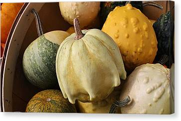 Harvest Of Gourds Canvas Print by Bruce Bley