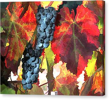 Harvest Time Grapes And Leaves Canvas Print by Elaine Plesser