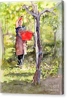 Canvas Print featuring the painting Harvesting Anna's Grapes by Bonnie Rinier