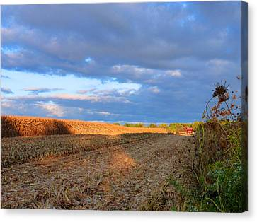 Harvesting Corn Canvas Print by Tina M Wenger