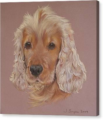 Harvey Canvas Print by Joanne Simpson