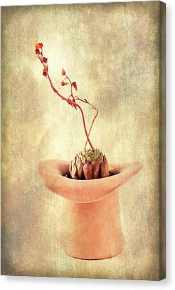 Hat And Echeveria  Canvas Print by Catherine Lau
