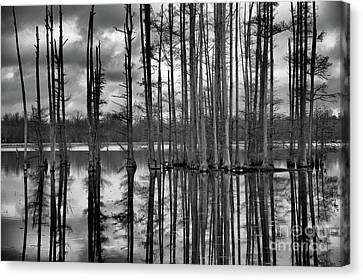 Hatchie National Wildlife Refuge Reflections Canvas Print by James Larkin