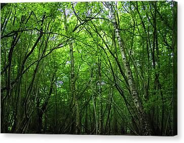 Hatfield Forest Canvas Print