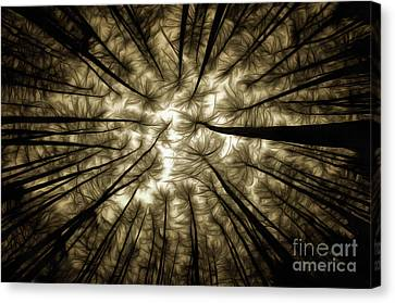 Sombre Canvas Print - Haunted Forest by Michal Boubin