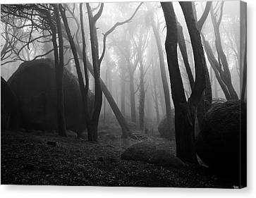 Canvas Print featuring the photograph Haunted Woods by Jorge Maia